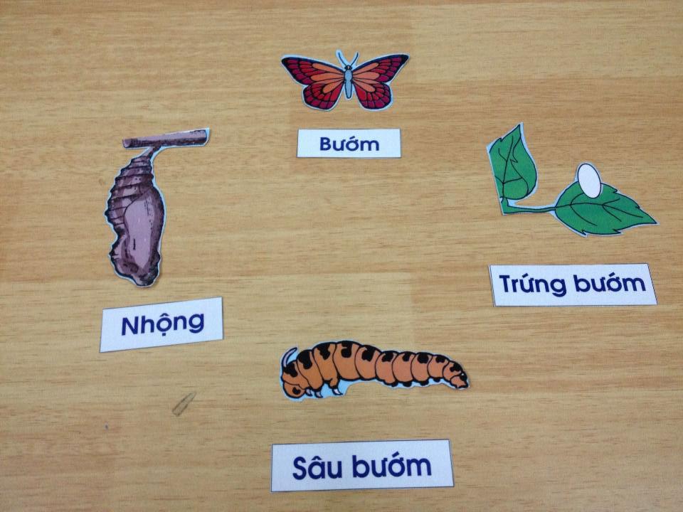 Sâu bướm cũng có những thời kỳ nhạy cảm
