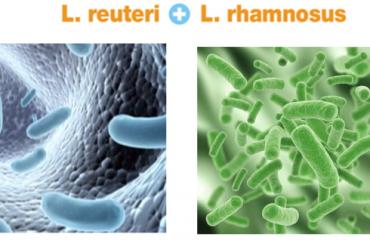 Loi khuan L.Reuteri va L.Rhamnosus