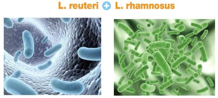 Men vi sinh giúp bổ sung lợi khuẩn tốt hệ tiêu hóa của trẻ